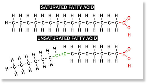 Examples of saturated and unsaturated fats, Palmitic Acid and Palmitoleic Acid respectively